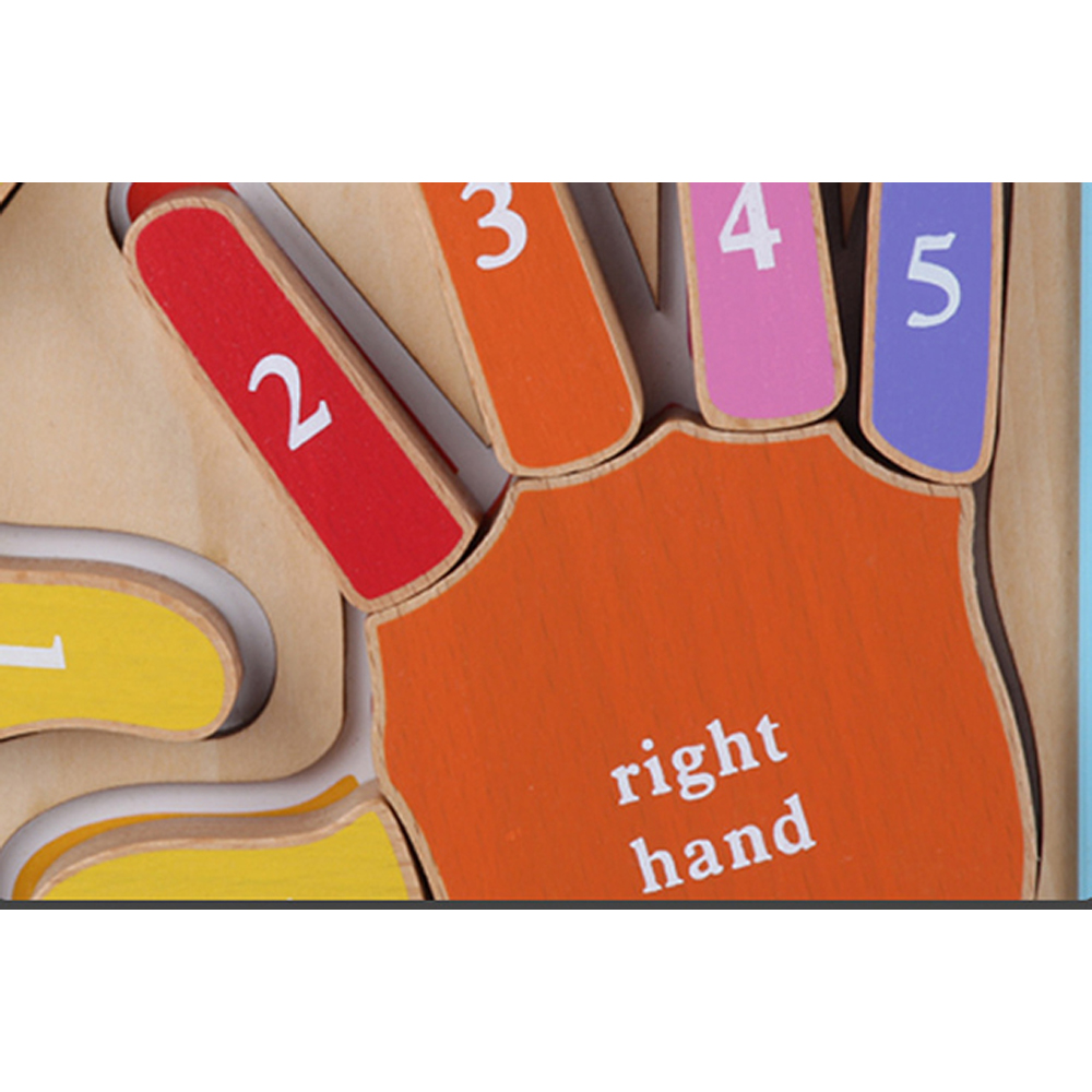 Puzzle Montessori 3D Invatam mainile si degetele numerotate